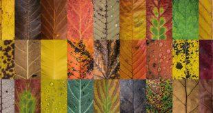 گالری تصاویر برگهای پاییزی ؛ تمام رنگهای طبیعت در ابعاد یک برگ!
