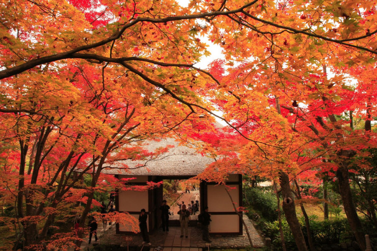 Top-29-Autumn-Jojakko-ji-Photo-by-norisons-740x492
