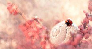 عکس های طبیعت در سبک ماکرو از ماگدا وازیژک