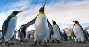 تصاویر پنگوئن ها از دید عکاسان 500 پیکسل