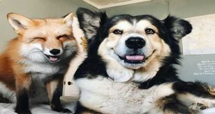 تصاویری از دوستی جونیپر و موس سگ و روباه دوست داشتنی