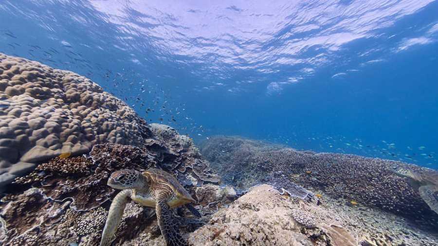 دیواره بزرگ مرجانی. این جاذبه طبیعی منحصربهفرد واقع در سواحل شرقی استرالیا، یکی از بیشمار عجایب طبیعی زیرآبی ارائهشده توسط گوگل استریت ویو است که میتوانید بدون صدمه زدن به آن، در اطرافش به گشتوگذار و غواصی مجازی بپردازید
