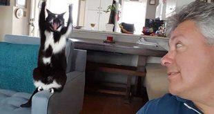 گربه ای عجیب