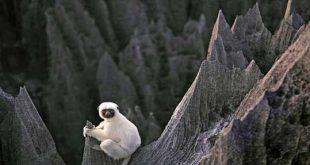 جنگل سنگی ماداگاسکار