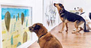 نمایشگاه هنری و تفریحی برای سگها