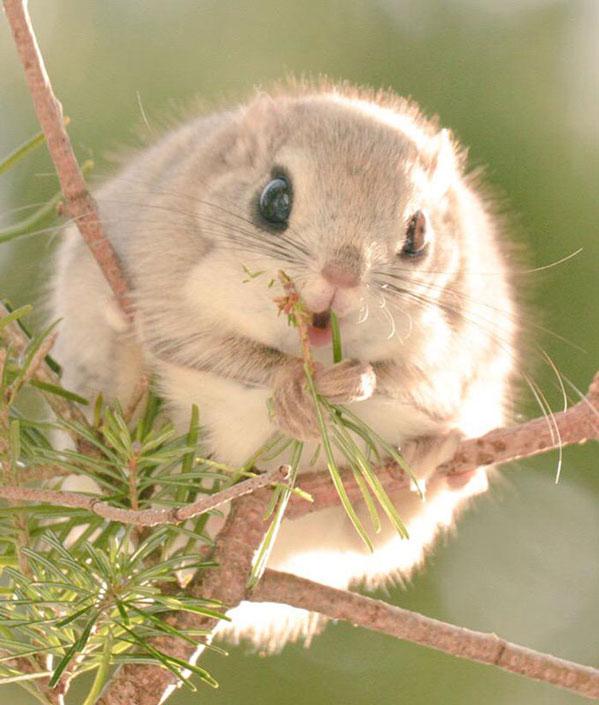 سنجاب های پرنده