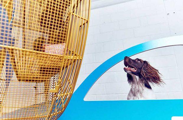 اولین نمایشگاه هنری و تفریحی برای سگها