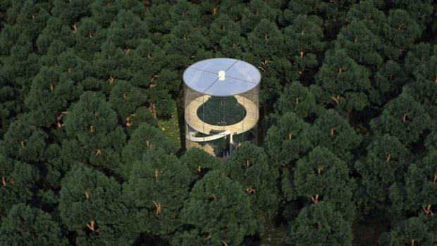 هارمونی با طبیعت ، درخت در خانه شیشه ای