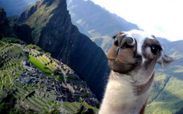 فوتوبمب یا حضور ناگهانی حیوانات در عکس های خاطره انگیز