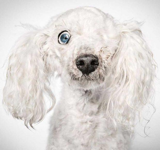 عکاسی پرتره از سگهای ولگرد برای پیداکردن خانههای همیشگی