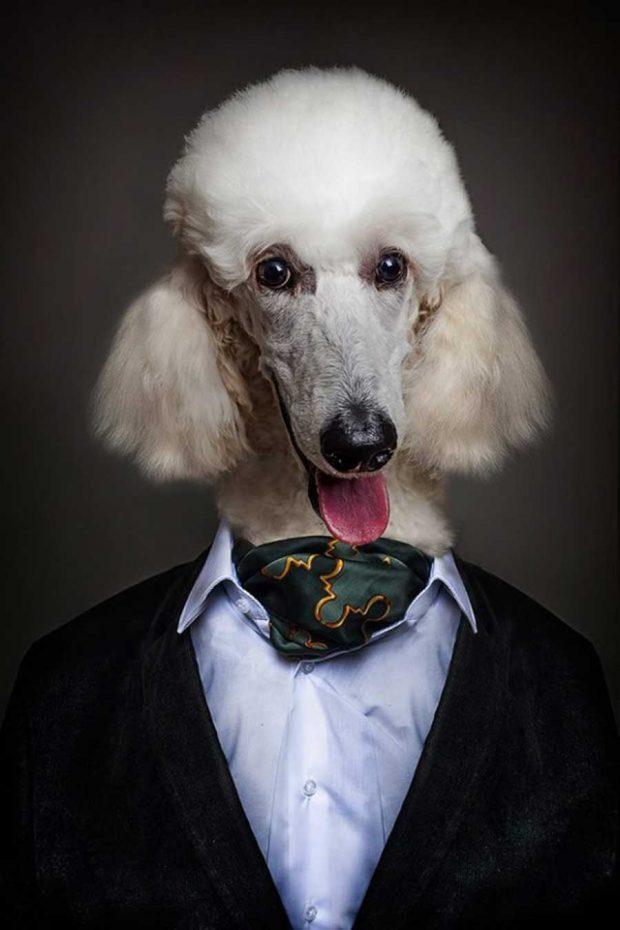 تصاویر خلاقانه از پرتره سگ ها با پوشش انسان هاتصاویر خلاقانه از پرتره سگ ها با پوشش انسان ها