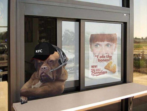 سگ بداخلاق دنیای مجازی را به چالش کشید