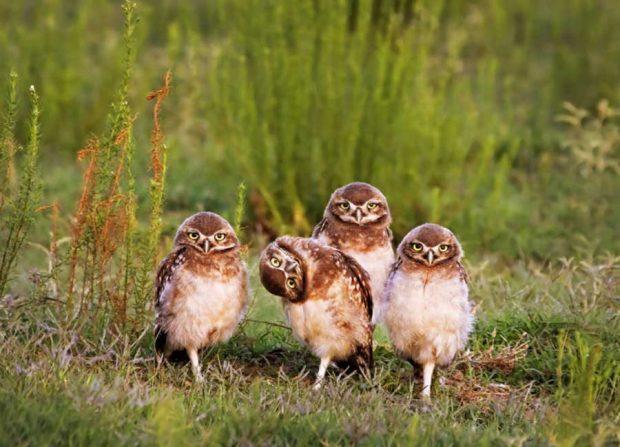 بهترین های مسابقه تصاویر و لحظات بامزه حیوانات در طبیعت 2016 معرفی شدند