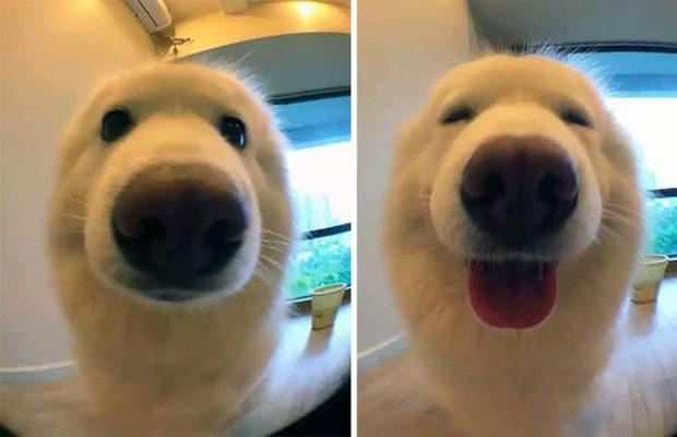 واکنش های جالب حیوانات