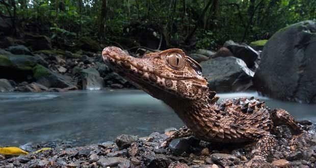 برندگان مسابقه عکاسی Wildlife Photo