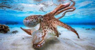 مسابقه عکاسی از دنیای زیر آب
