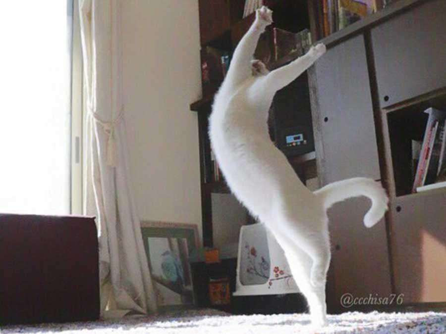 تصاویری از گربه ای که پنهانی می رقصد