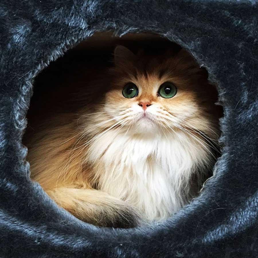 گربه های اسموتی جذاب در مقابل دوربین