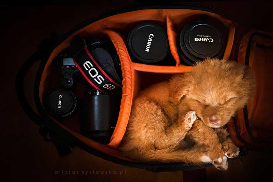 تصاویر عکاس لهستانی از سگ ها