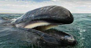 نهنگ ها و دلفین ها