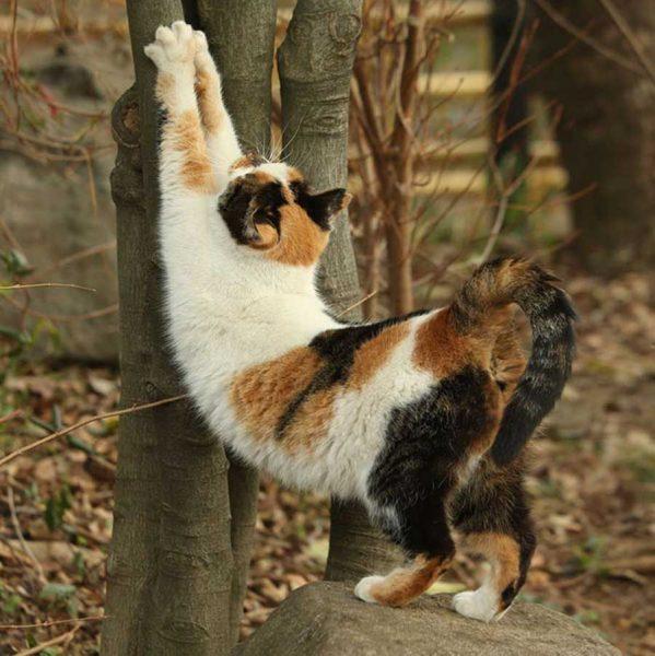 تصاویری از شکار صحنههایی از صورت گربه ها