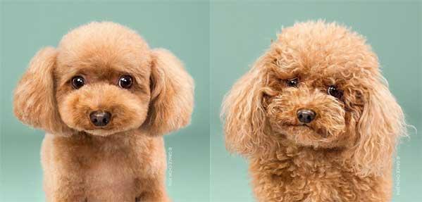 آرایش موی سگ ها