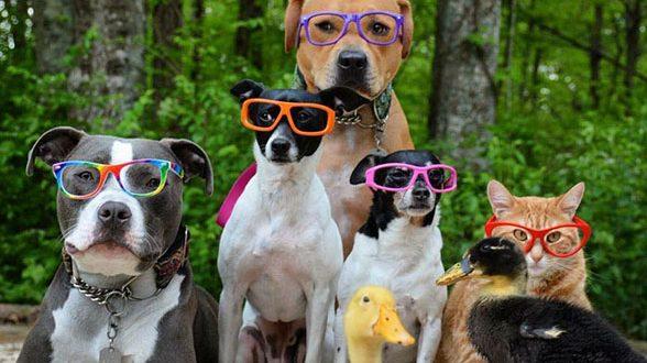 زندگی سگ و گربه و جوجه اردک در یک خانواده دوست داشتنی