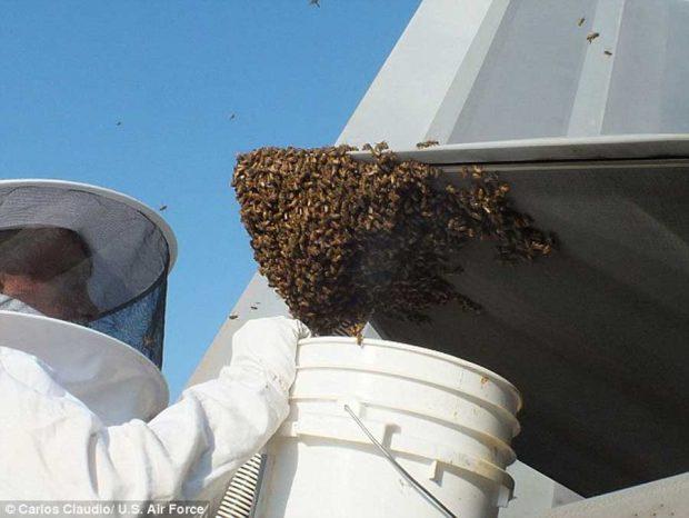 زمین گیر کردن جنگنده F-۲۲ توسط زنبورها