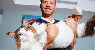 گربه 13 کیلوگرمی
