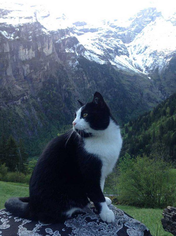 تصاویر گربه ای که راهنمای مرد گمشده در کوه شد