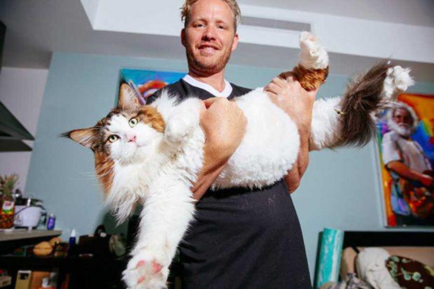 تصاویر گربه 13 کیلوگرمی بزرگترین گربه نیویورکی