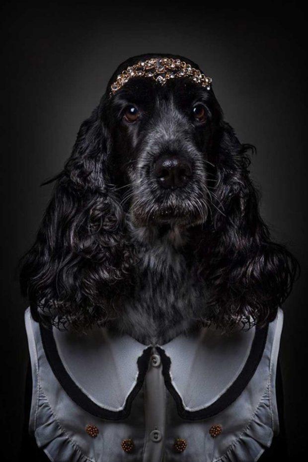 تصاویر خلاقانه از پرتره سگ ها با پوشش انسان ها