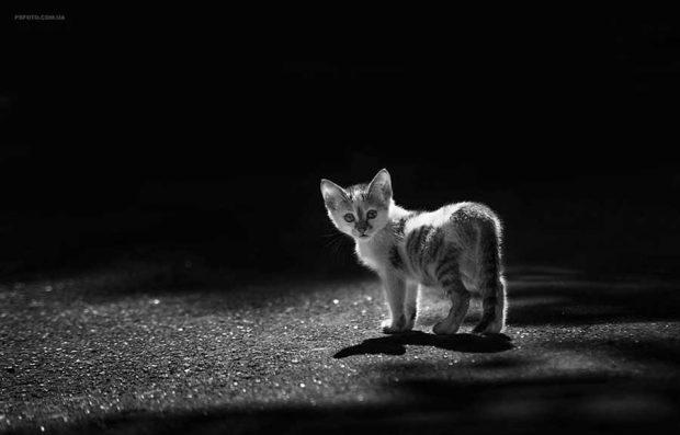 تصاویر دیدنی از پرتره حیوانات اثر عکاس اوکراینی سرگئی پولیوشکو