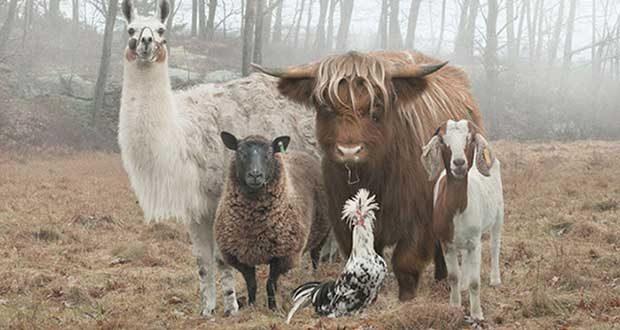 تصاویری جذاب از حیوانات